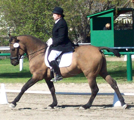Show Horse Gallery - Sandman's Magic