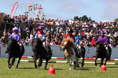 Show Horse Gallery - Shetland Steeplechase
