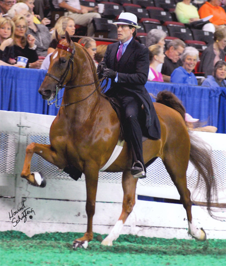 Show Horse Gallery - Singsation