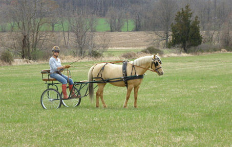 Show Horse Gallery - Smiths Creek Cinnamon Twist
