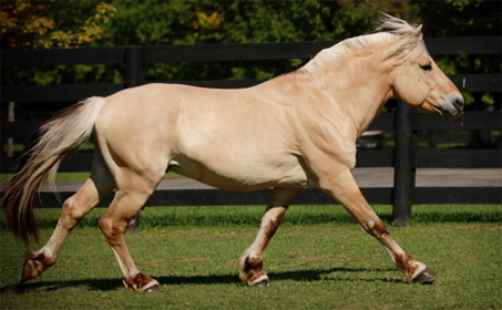 Snf kjell show horse gallery a different horse is featured every