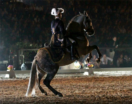 Show Horse Gallery - Travesso