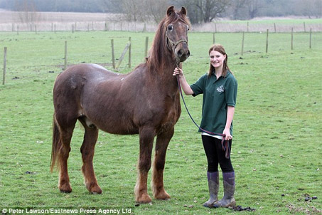 Show Horse Gallery - World's Oldest Horse