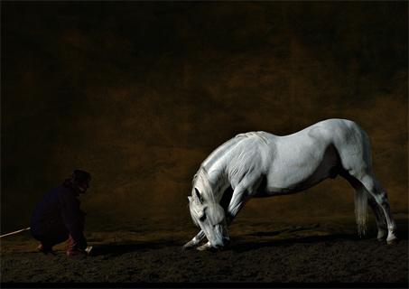 Yann Arthus Bertrand Photographer Show Horse Gallery A