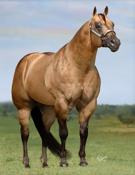 Show Horse Gallery - Horses Aren't Supposed to Look Like Beef Cows