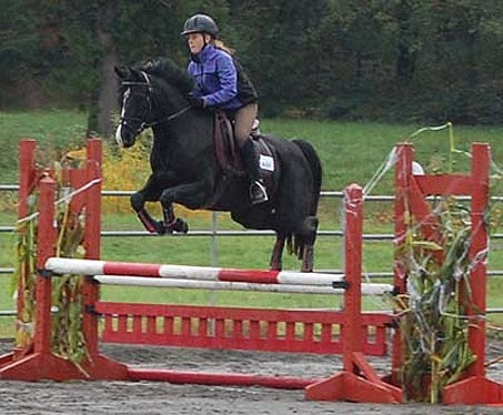 Show Horse Gallery - Zoe